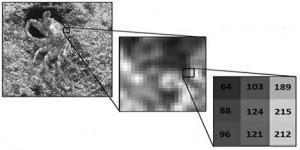 فایل آموزش پردازش تصویر در متلب